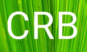 6 common credit terms you should know: CRB